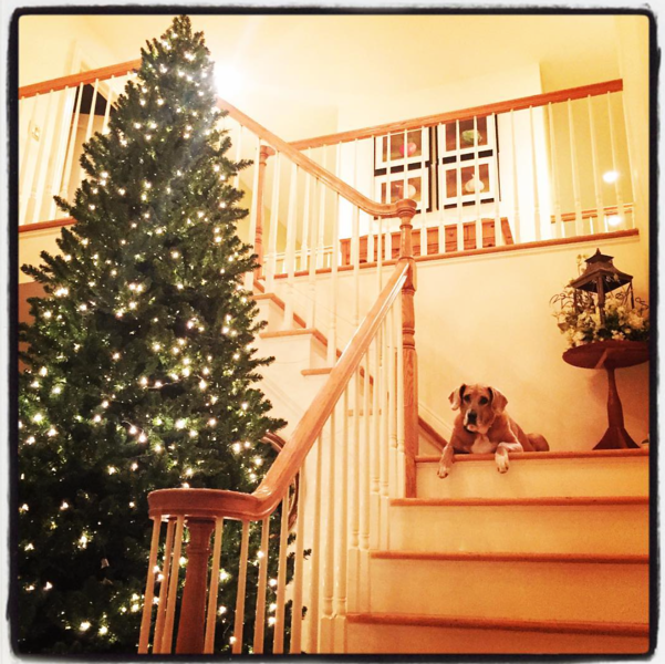 dog and Christmas Tree